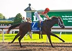 My Conquestadory in the Darley Alcibiades Stakes.