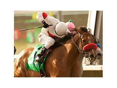 Tres Borrachos is the likely favorite for the San Pasqual.