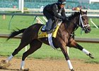 Uncle Mo at Churchill Downs.