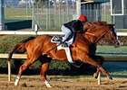 Shackleford breezed a half-mile in :47 2/5 on a fast main track at Churchill Downs Nov. 17.