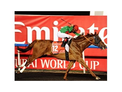 "Animal Kingdom<br><a target=""blank"" href=""http://photos.bloodhorse.com/AtTheRaces-1/at-the-races-2013/27257665_QgCqdh#!i=2434323266&k=NnvxkDx"">Order This Photo</a>"
