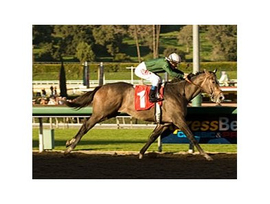 "The Pamplemousse won the San Rafael Jan. 17 at Santa Anita. <br><a target=""blank"" href=""http://www.bloodhorse.com/horse-racing/photo-store?ref=http%3A%2F%2Fpictopia.com%2Fperl%2Fgal%3Fprovider_id%3D368%26ptp_photo_id%3D7456880%0D%0A%26ref%3Dstory"">Order This Photo</a>"