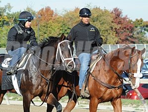 Verrazano Belmont Park, October 26, 2013.