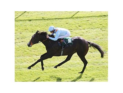 "Toormore<br><a target=""blank"" href=""http://photos.bloodhorse.com/AtTheRaces-1/at-the-races-2013/27257665_QgCqdh#!i=2775252676&k=hX95CDq"">Order This Photo</a>"