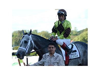 "Graydar<br><a target=""blank"" href=""http://photos.bloodhorse.com/AtTheRaces-1/at-the-races-2013/27257665_QgCqdh#!i=2796356687&k=whCjRMZ"">Order This Photo</a>"