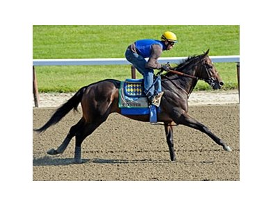 Paynter at Belmont Park 6/7/2012