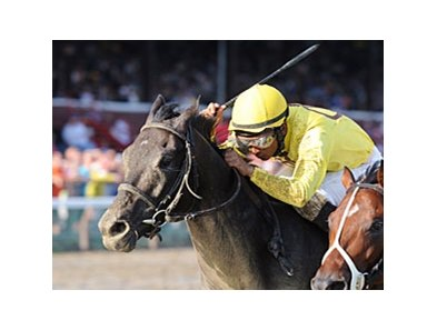 "Quick Wit won the off-the-turf running of the National Museum of Racing Hall of Fame on Aug. 10.<br><a target=""blank"" href=""http://photos.bloodhorse.com/AtTheRaces-1/at-the-races-2012/22274956_jFd5jM#!i=2018011364&k=jKp9r5w"">Order This Photo</a>"