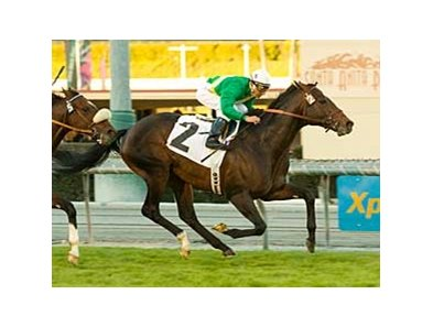 "Proudinsky, with Rafael Bejarano aboard, wins the San Gabriel on Dec. 28 at Santa Anita. <br><a target=""blank"" href=""http://www.bloodhorse.com/horse-racing/photo-store?ref=http%3A%2F%2Fpictopia.com%2Fperl%2Fgal%3Fprovider_id%3D368%26ptp_photo_id%3D7238077%0D%0A%26ref%3Dstory"">Order This Photo</a>"