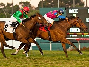 Star Billing wins the 2011 Matriarch.