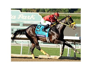"Trinniberg finished the year with a win the Breeders' Cup Sprint.<br><a target=""blank"" href=""http://photos.bloodhorse.com/BreedersCup/2012-Breeders-Cup/Sprint/26128714_drZjpJ#!i=2194499807&k=HLrL995"">Order This Photo</a>"