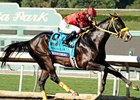 "Trinniberg faces 8 in the Churchill Downs Stakes.<br><a target=""blank"" href=""http://photos.bloodhorse.com/BreedersCup/2012-Breeders-Cup/Sprint/26128714_drZjpJ#!i=2194499807&k=HLrL995"">Order This Photo</a>"
