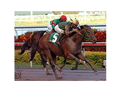 "2008 Hutcheson Stakes winner Smooth Air will skip the Sunshine Millions Classic.<br><a target=""blank"" href=""http://www.bloodhorse.com/horse-racing/photo-store?ref=http%3A%2F%2Fpictopia.com%2Fperl%2Fgal%3Fprovider_id%3D368%26ptp_photo_id%3D3215411%26ref%3Dstory"">Order This Photo</a>"