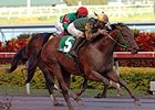 "Smooth Air won the 2008 Hutcheson at Gulfstream Park. <br><a target=""blank"" href=""http://www.bloodhorse.com/horse-racing/photo-store?ref=http%3A%2F%2Fgallery.pictopia.com%2Fbloodhorse%2Fgallery%2FS628937%2Fphoto%2F3215411%2F%3Fo%3D1"">Order This Photo</a>"