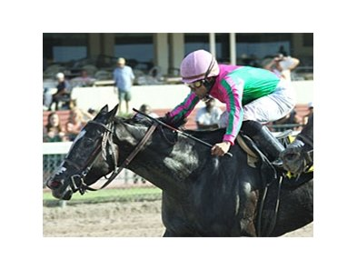 First Passage is one of four Marty Wolfson-trained horses entered in the Princess Rooney Handicap.