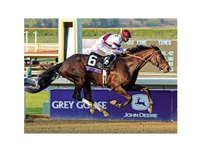 "Royal Delta was a repeat winner in the Breeders' Cup Ladies' Classic.<br><a target=""blank"" href=""http://photos.bloodhorse.com/BreedersCup/2012-Breeders-Cup/Ladies-Classic/26130180_8NMncD#!i=2191660144&k=PLgv2wz"">Order This Photo</a>"