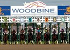 Woodbine Starting Gate