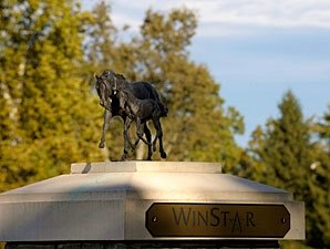 WinStar Charity Memorabilia Auction on eBay