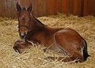 Filly, Bernardini - Pure Clan, born Jan 10.