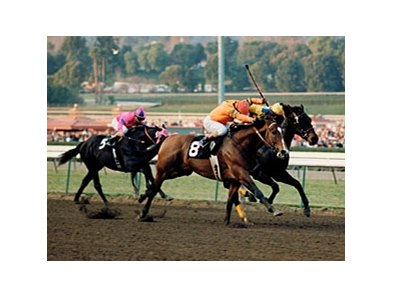 Variety Road (8) won the 1987 San Fernando Stakes.