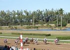Quarter Horse racing at Hialeah Park