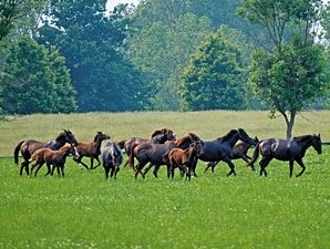 Study: KY Horses Generate Billions of Dollars