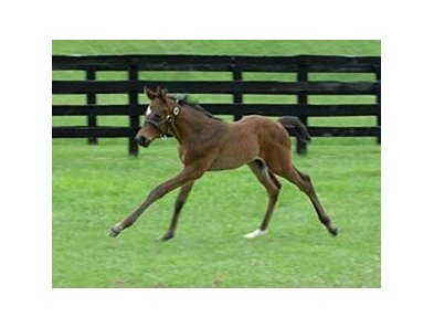 A full brother to Curlin frolics at Fares Farm.