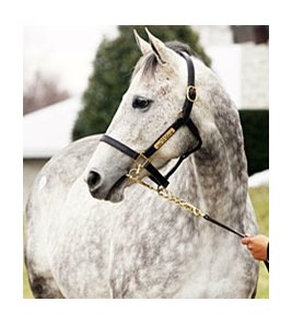 Snow Top Mountain brought $950,000 during the second session of the Keeneland January horses of all ages sale.