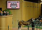 Hip #1065, a Medaglia d'Oro colt, sold for $350,000.