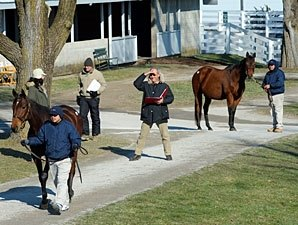 Strong Final Numbers for Keeneland January