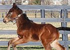 Custom for Carlos first foal.