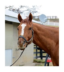 "Wise Dan<br><a target=""blank"" href=""http://photos.bloodhorse.com/Photographers/Anne-M-Eberhardt/23986983_7NbQ9Q#!i=2314020556&k=qTgCLxM"">Order This Photo</a>"