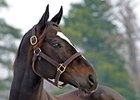 It's a Date: Zenyatta Booked to Bernardini
