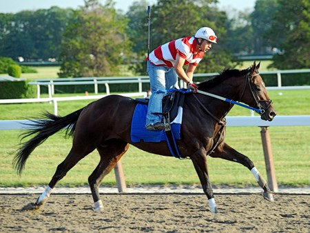 (June 6, 2011) Zayat Stables NEHRO, works a 1/2 mile Monday morning in :50 4/5 at Belmont...