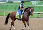 Harry's Holiday on the track at Churchill Downs ahead of the 2014 Kentucky Derby