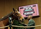 Aloof, Hip 246, sold for $3.9 million on Nov. 5.