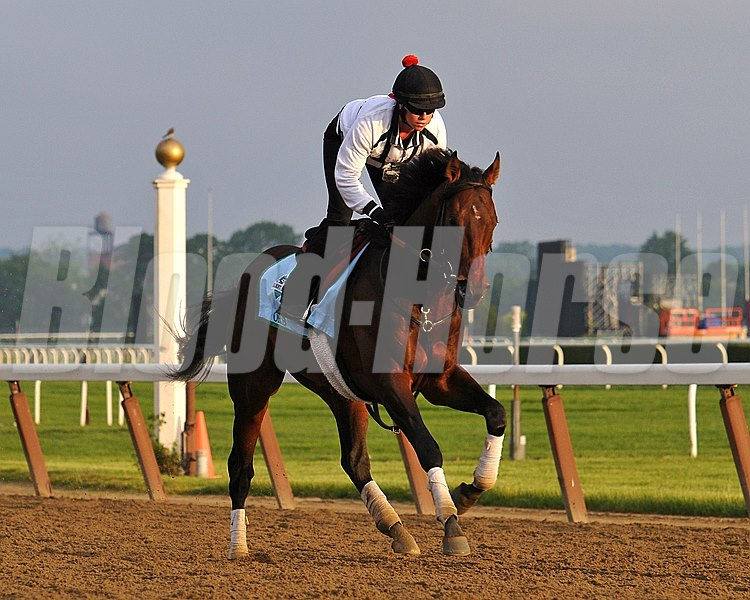 Kentucky Derby winner Orb, finishing up his Thursday morning work, at Belmont...