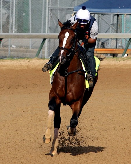 Normandy Invasion on the track at Churchill Downs on May 2, 2013.