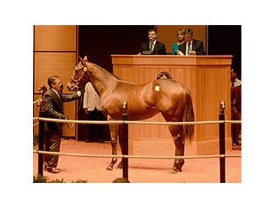 Hip 278 by Harlan's Holiday sold for $250,000.