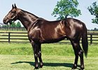 Slew City Slew, Sire of Lava Man, Dead