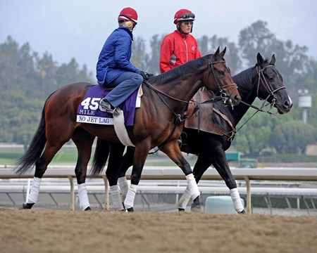 Caption:  No Jet Lag