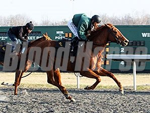 Judy the Beauty - March 21, 2015, Turfway Park Work