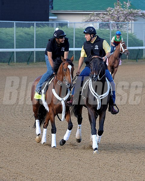 Caption:  Goldencents on track for the first time 