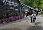 Walk On: A handler walks a yearling for a prospective buyer at the Fasig-Tipton Saratoga yearling sale.
