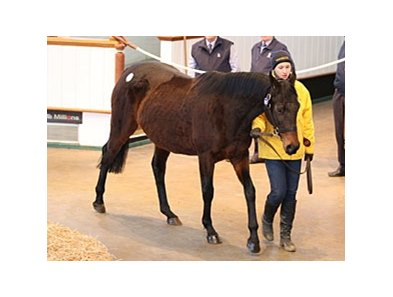 Diara Angel was purchased for 100,000 guineas ($164, 420).
