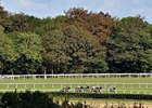 Racing at Goodwood Racecourse.