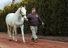 Slideshow: Tapit: 2014 Leading Sire
