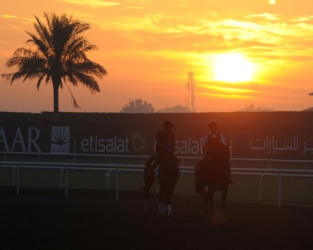 A morning at Medyan during Dubai World Cup Week.