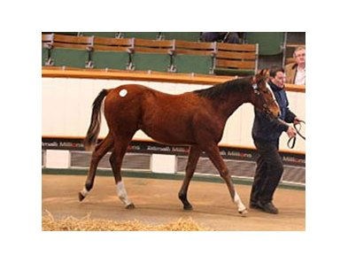 Lot 271, a Champs Elysees colt, brought 160,000 guineas.