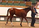 Tattersalls Foal Sale Posts Records in Opener