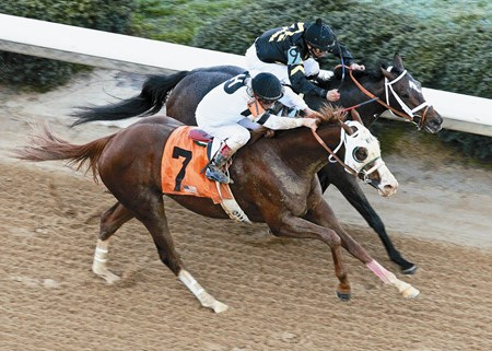 Oaklawn Park    Hot Springs, Arkansas WILL TAKE CHARGE wins The Rebel Stakes Gr II - 53rd Running on 3/16/2013 Purse $600,000 1-1/16 Miles  1:45 Willis D. Horton, Owner D. Wayne Lukas, Trainer Jon Court, Jockey Oxbow (2nd) Den's Legacy (3rd) $58.00  $16.20  $9.80 Order of Finish - 7, 9, 6 Please Give Photo Credit To:  Coady Photography